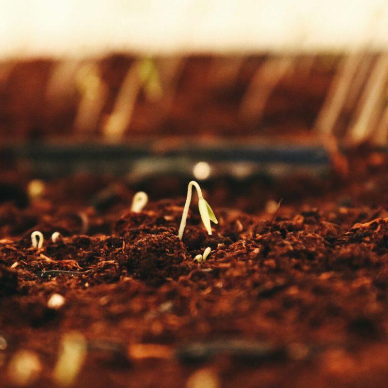 seeds-square-1024x1024